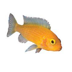 Catfish live fish and fish on pinterest for Petsmart fish guarantee