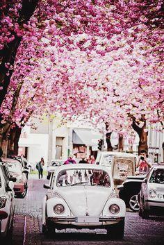 a #pretty drive #blossom #flowers