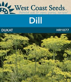 Dill Seeds - Dukat (approx. 566 seeds) West Coast Seeds https://www.amazon.ca/dp/B00KN69RMS/ref=cm_sw_r_pi_dp_x_OVktzb307XY7T