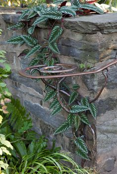 Chanticleer Garden. Cissus discolor, a tropical vine from Southeast Asia, climbs through a handmaid handrail and over a wall in The Entrance Garden. Photo: Lisa Roper