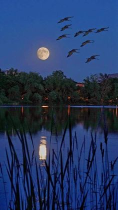Full moon at the solstice, by Jim Radford. Beautiful Nature Wallpaper, Beautiful Moon, Beautiful Landscapes, Moon Photos, Moon Pictures, Moon Photography, Landscape Photography, Moon Dance, Moon Shadow