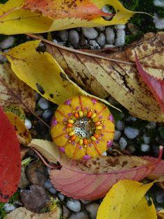 fiberrainbow Felted Jewelry, Fruit, Plants, Plant, Planets, Felt Decorations