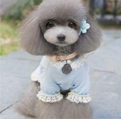 #sweet #dog
