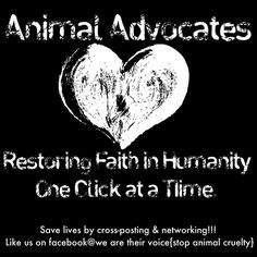 for all the animal advocates out there! Stop Animal Cruelty, Dog Fighting, Together We Can, Animal Welfare, Animal Rights, Love Heart, Compassion, Animal Rescue, The Fosters