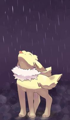 Jolteon on a drizzly night