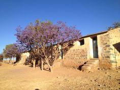 La missione di Mission Bambini in Eritrea continua: oggi ci aspettano in un'altra scuola tanti altri bambini! Purtroppo ne abbiamo già trovati diversi ammalati, due in forma seria...