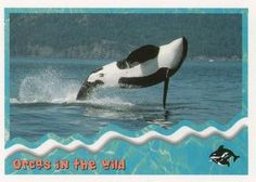 1995 SkyBox Free Willy The Adventure Home Orcas in the wild: breaching Front Free Willy, Sports Gallery, Orcas, Trading Card Database, Trading Cards, Whale, Adventure, Animals, Killer Whales