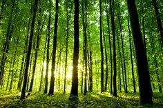 Green forest trees mural wallpaper repositionable por StyleAwall