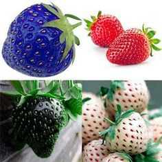 Select the kind of strawberries you want to grow. Spring-bearing strawberry plants produce berries for several weeks in June. Everbearing strawberry plants produce berries three times a year--in spring, summer and autumn. Strawberry Seed, Strawberry Plants, Fruit Plants, Garden Seeds, Planting Seeds, Everbearing Strawberries, Pineapple Planting, Organic Compost, Pineapple Fruit