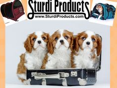 These pups are dreaming of a warmer, more comfortable traveling space… #SturdiProducts