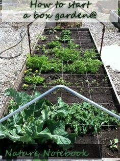 How I built my box garden. Part of a 10 day series on Planning a Summer Garden  Nature Notebook #gardening #nature