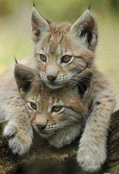 creatures-alive:  Lux,Cats by SchlangenTieger
