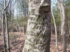 The Polish Tree