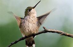 Hummingbird Gardening and Photography
