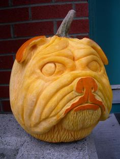 Bull Dog Halloween Pumpkin - looks like our Rocky Chester Rodriguez lol