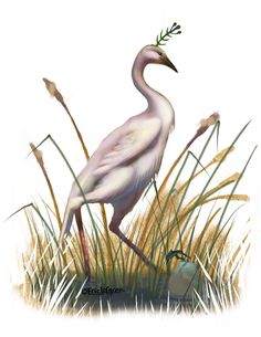 Eric Lofgren Presents: Exotic Shore Bird - Misfit Studios | Eric Lofgren | Publisher Resources | DriveThruRPG.com Shorebirds, Stock Art, Art File, All Art, Art Images, Exotic, Fantasy, Artist, Fantasia