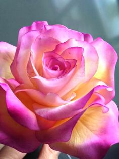 The key issue is to pick a rose which you find beautiful, and that suits your garden. The rose is a kind of flowering shrub.