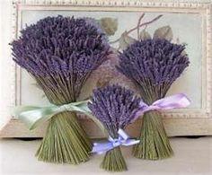 Lavender Grosso Bouquet-dried lavender bouquet by Lavender Fanatic Lavender Bridesmaid, Lavender Bouquet, Lavender Flowers, Dried Flowers, Bridesmaid Bouquets, Wedding Lavender, Lavender Centerpieces, Rustic Wedding Centerpieces, Wedding Rustic