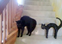 13.) I hear a black cat crossing your path is bad luck, but this is ridiculous.