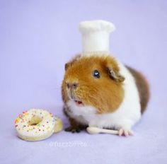 She's a pig of many talents. She can bake… | This Fuzzy Guinea Pig's Instagram Is All You'll Ever Need