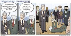 Adventures of business cat - Imgur