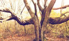#photography #trees #outside #flora #maine #mainetrees #murphyempiredesign #inspiration #oldtree #hauntedtree #hauntedwoods #woods #photo