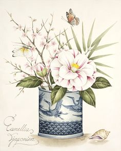 Camellia and cherry blossom in a blue and white pot. Original watercolour painting by Kelly Higgs, also available as a limited edition print.