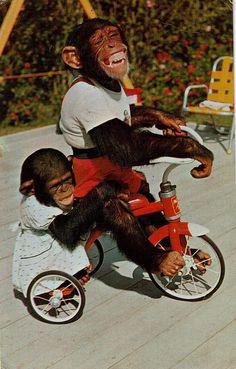 I love the girl monkey