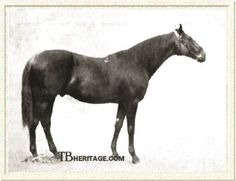 Bona Vista, Tapit's thirteenth generation sire. A miler on the track, he became a source of both speed and stamina in the breeding shed. By the great stallion and racehorse Bend 'Or out of the Macaroni mare Vista.