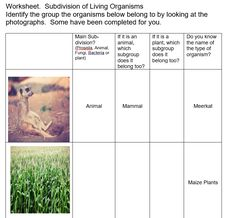 Worksheet on subdividing living organisms Teaching Science, Teaching Resources, Fungi, Did You Know, Worksheets, Live, Plants, Pictures, Photos