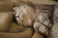 pat me pat me! by Sigma.DP2.Kiss.X3, via Flickr