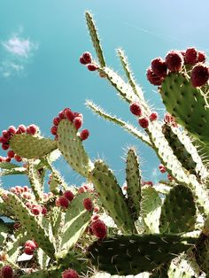 You can eat cactus! Not all the cactus types though. This guide will help you to learn how to cook cactus.