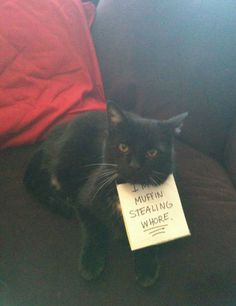 The Funniest Moments In Pet Shaming History (PHOTOS)