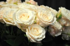 Bombastic Roses just like in The Royal Wedding from Drammechter.com for Over 40 years in Encinitas, Ca. 92024