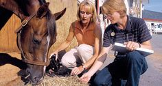 Hock lateral view injection site equine system for Equine motor neuron disease in horses