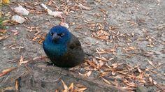 Un pájaro realmente enfadado