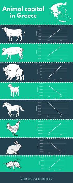Animal capital in Greece