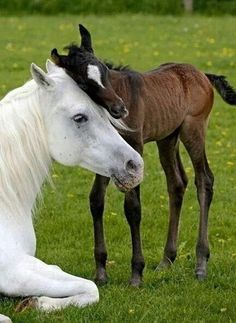 Horses. ..Beautiful