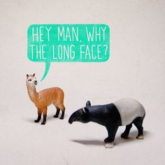 Hey Man. Why The Long Face?     - Aled Lewis