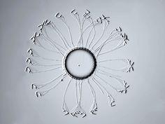 Corethron pennatum (Grunow) aus der Antarktis  Material von einer Expedition des Forschungsschiffs Polarstern vom Alfred Wegener Institut Bremerhaven  6. Oktober 1992 , 57°S 29°W , Nähe südliche Orkneyinseln