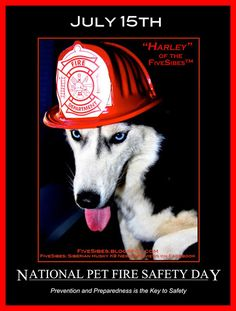 FiveSibes™: Blog the Change for Animals: Pet Fire Safety Day; Are You Prepared?