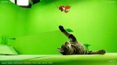 Meowthra #TheLegoNinjagoMovie
