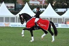 Sezuan stallion