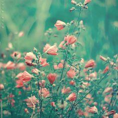flores imagenes hermosas - Buscar con Google