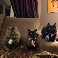 These very intimidating businessmen.