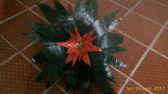 Planta hecha con tubos de papel higiénico. Fundación Beraca Toilet Paper Tubes, Paper Envelopes, Plants