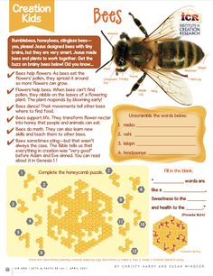 Bumblebees, honeybees, stingless bees—yes, please! Jesus designed bees with tiny brains, but they are very smart. You're never too young to be a creation scientist! Kids, discover fun facts about God's creation with ICR's special Creation Kids learning and activities page. Download the free printable.