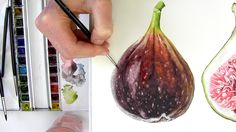 ***(Excellent tutorial!) How to paint a realistic, velvety fig in watercolour with Anna Mason