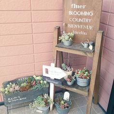 Indoor Garden, Indoor Outdoor, Front Entrances, Private Garden, Flowering Trees, Garden Styles, Planting Succulents, Ladder Decor, Diy And Crafts
