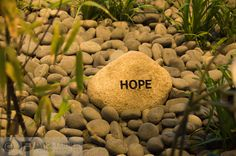 A close-up of a #hope stone in the Thea and James Stoneman Healing Garden in the Yawkey Center for #Cancer Care at Dana-Farber.